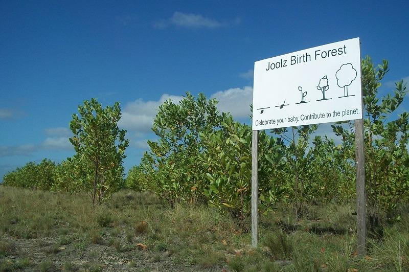 Birth Forest Joolz